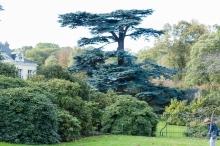 Pascal Bonnet-GEM de Rungis-Sortie arboretum CM 21-10-2017-5