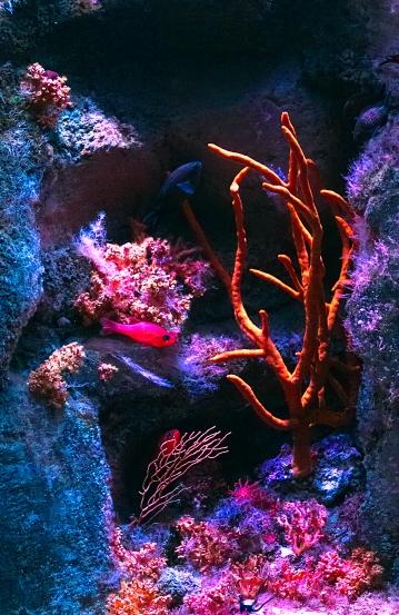 Pascal Bonnet - GEM de Rungis sortie Aquarium du Trocadéro le 17-04-2018-13