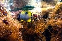 Pascal Bonnet - GEM de Rungis sortie Aquarium du Trocadéro le 17-04-2018-16