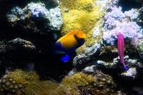 Pascal Bonnet - GEM de Rungis sortie Aquarium du Trocadéro le 17-04-2018-18