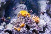 Pascal Bonnet - GEM de Rungis sortie Aquarium du Trocadéro le 17-04-2018-19