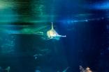 Pascal Bonnet - GEM de Rungis sortie Aquarium du Trocadéro le 17-04-2018-23